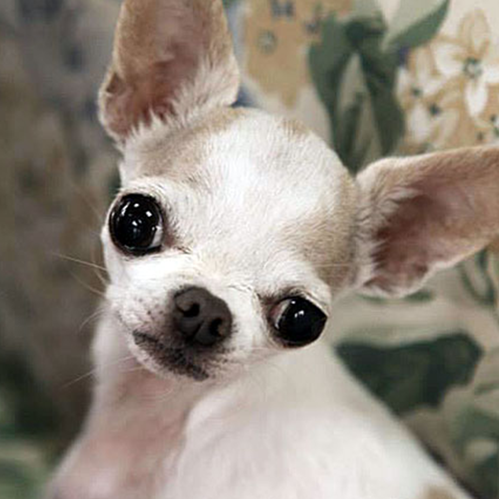meet millie from the MBJungle Foundation: protecting special needs pets!
